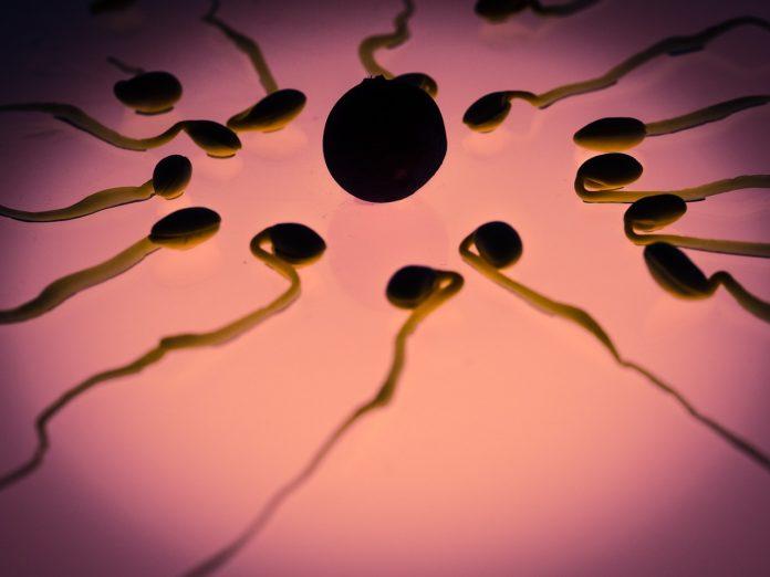 Cómo tratar la astenozoospermia. Imagen de espermas.